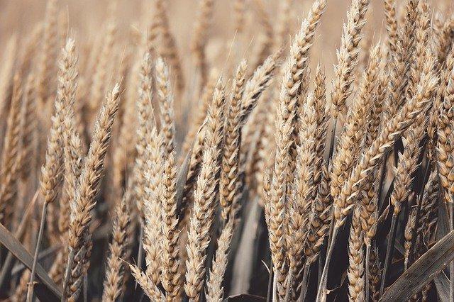 Céréales et leur préparation