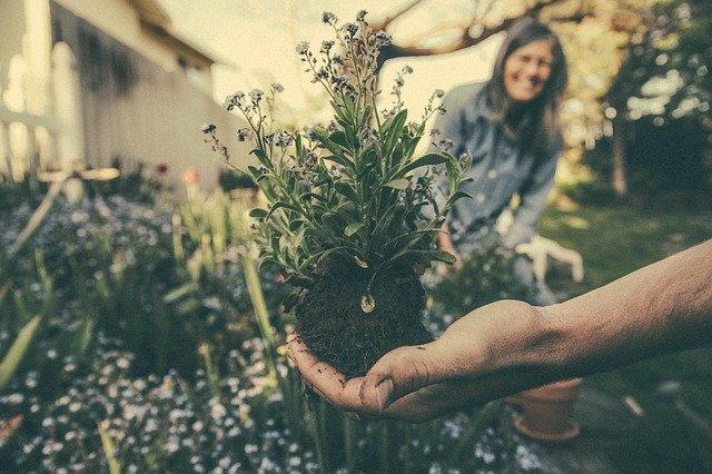 plante jardin à cultiver bien choisir
